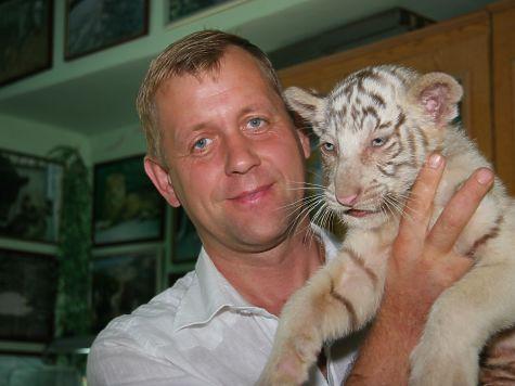 Редчайшие белые бенгальские тигрята родились вялтинском зоопарке
