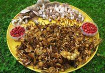 Сюрпризы грибной охоты: мухоморы бывают съедобными и вкусными