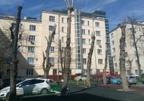Обрезка деревьев в Москве: эксперты объяснили правила